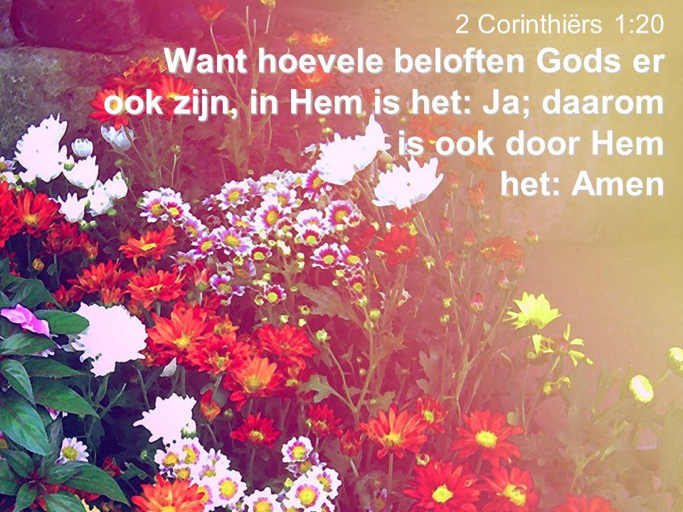 Want hoevele beloften Gods er ook zijn, in Hem is het: Ja; daarom is ook door Hem het: Amen 2 Corinthiërs 1:20 Want hoevele beloften Gods er ook zijn,