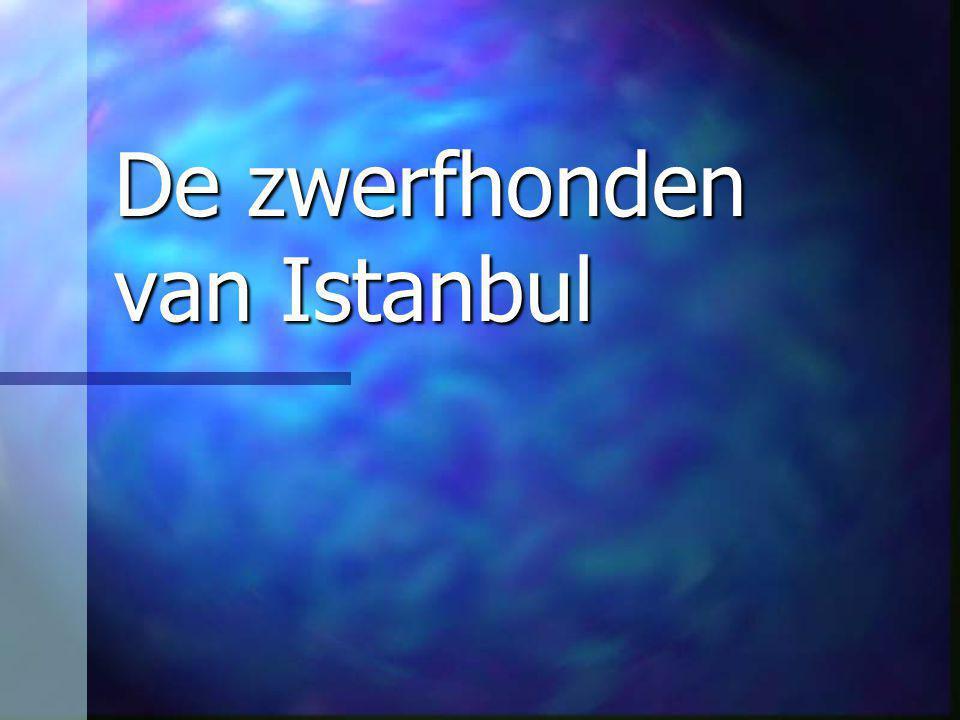 De zwerfhonden van Istanbul