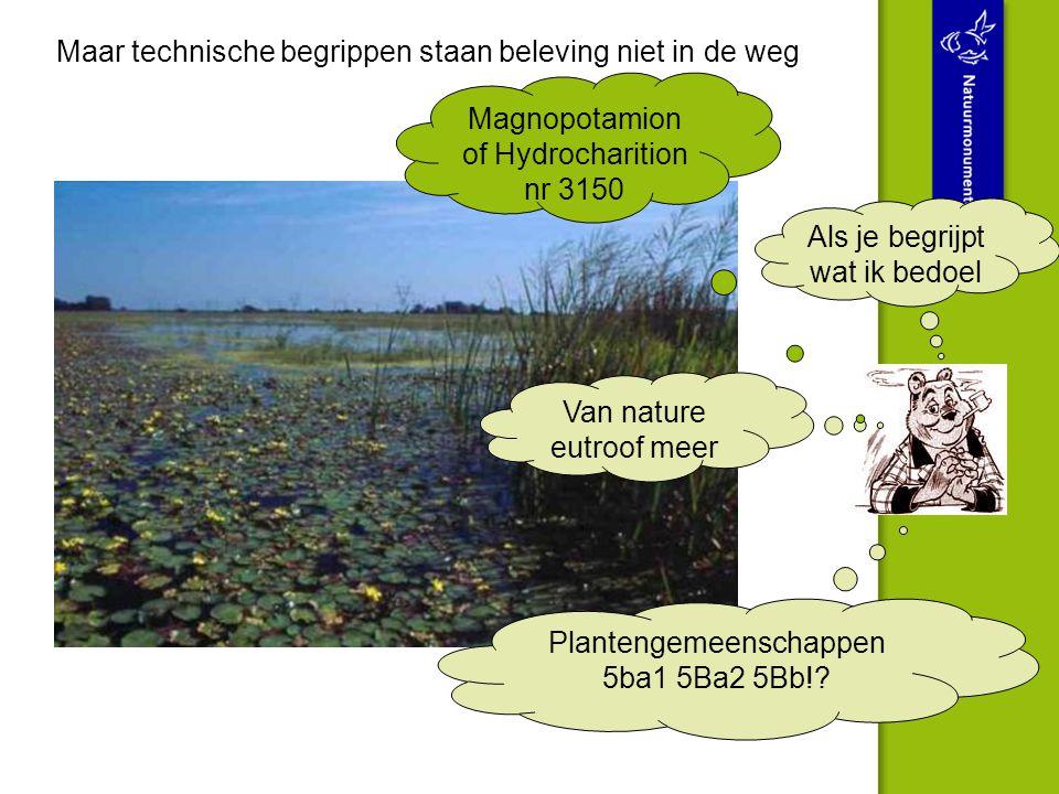 Maar technische begrippen staan beleving niet in de weg Plantengemeenschappen 5ba1 5Ba2 5Bb!? Van nature eutroof meer Magnopotamion of Hydrocharition
