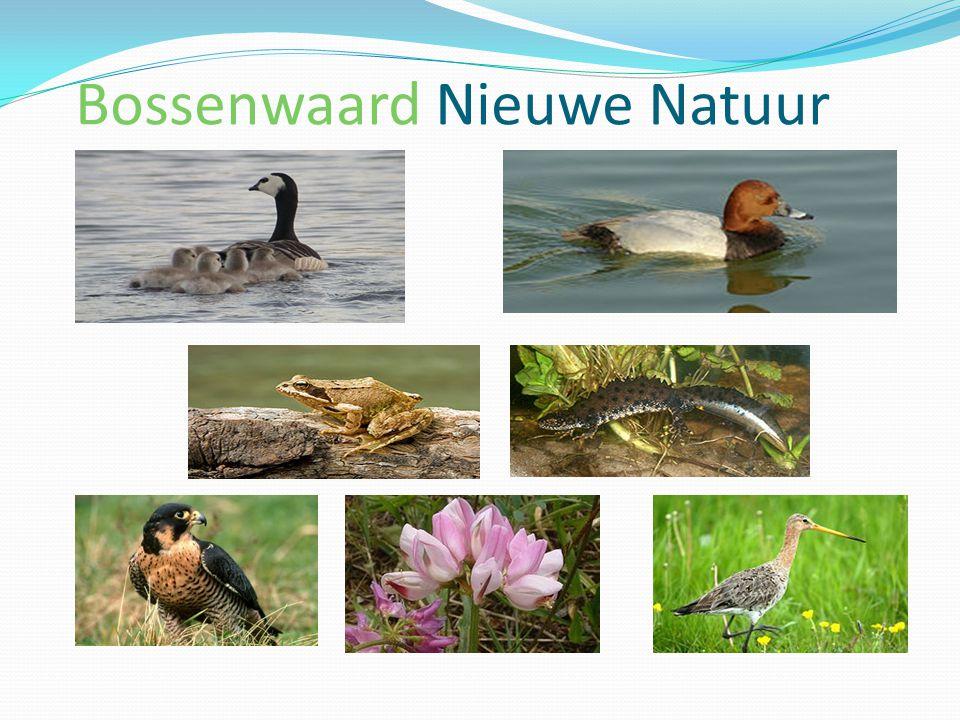 Bossenwaard Nieuwe Natuur