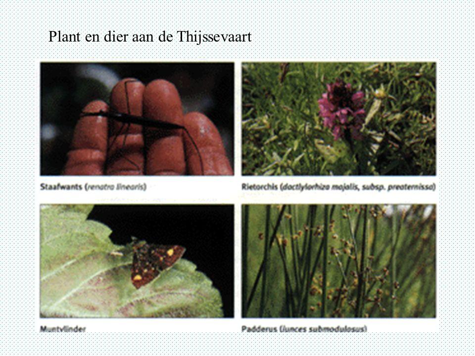 Plant en dier aan de Thijssevaart