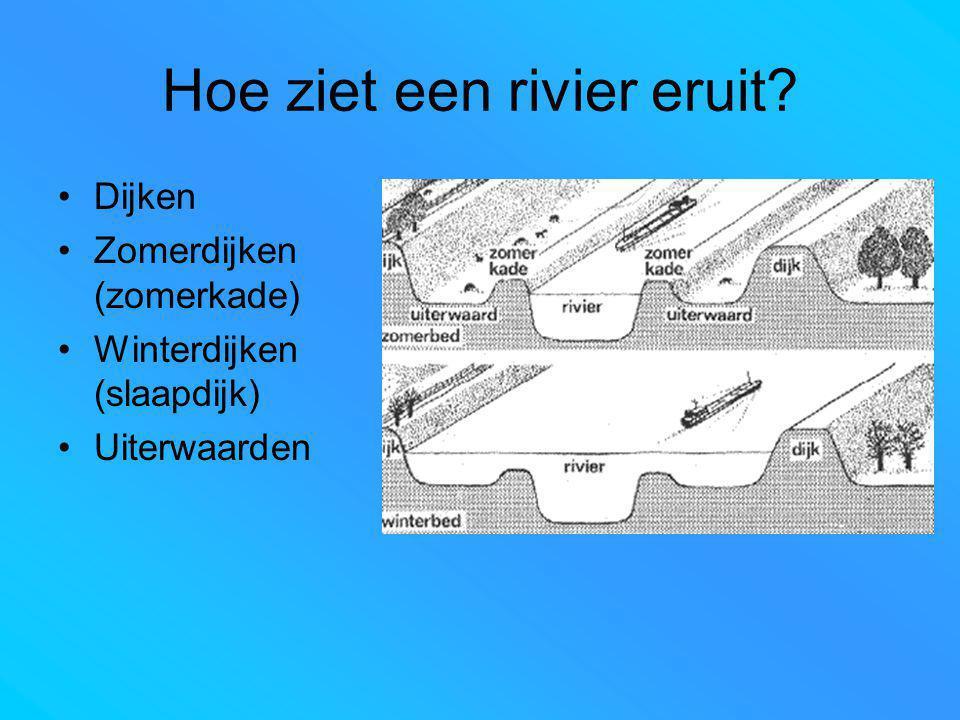 Hoe ziet een rivier eruit? Dijken Zomerdijken (zomerkade) Winterdijken (slaapdijk) Uiterwaarden