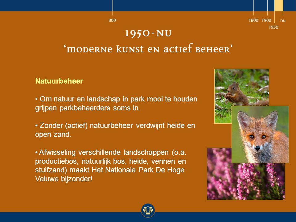Natuurbeheer Om natuur en landschap in park mooi te houden grijpen parkbeheerders soms in. Zonder (actief) natuurbeheer verdwijnt heide en open zand.