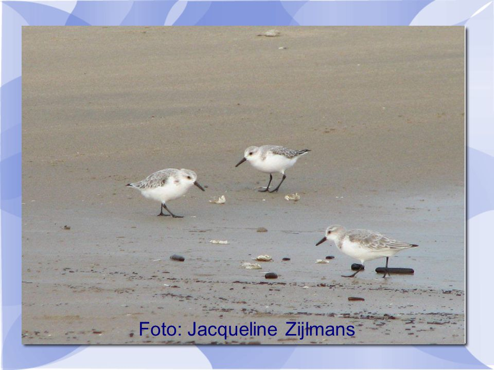 Foto: Jacqueline Zijlmans