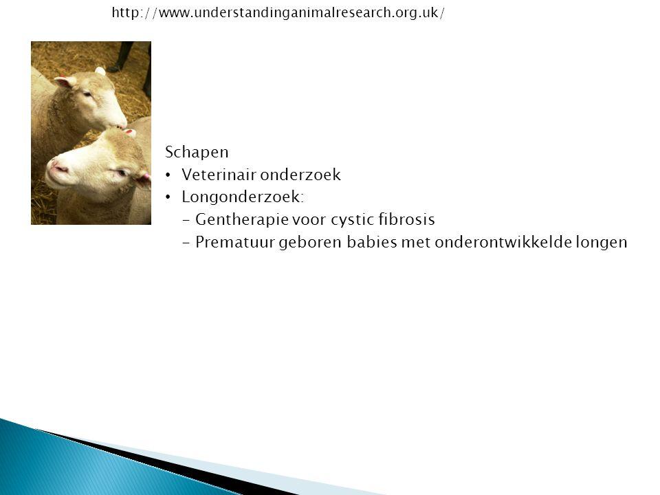 http://www.understandinganimalresearch.org.uk/ Schapen Veterinair onderzoek Longonderzoek: - Gentherapie voor cystic fibrosis - Prematuur geboren babi