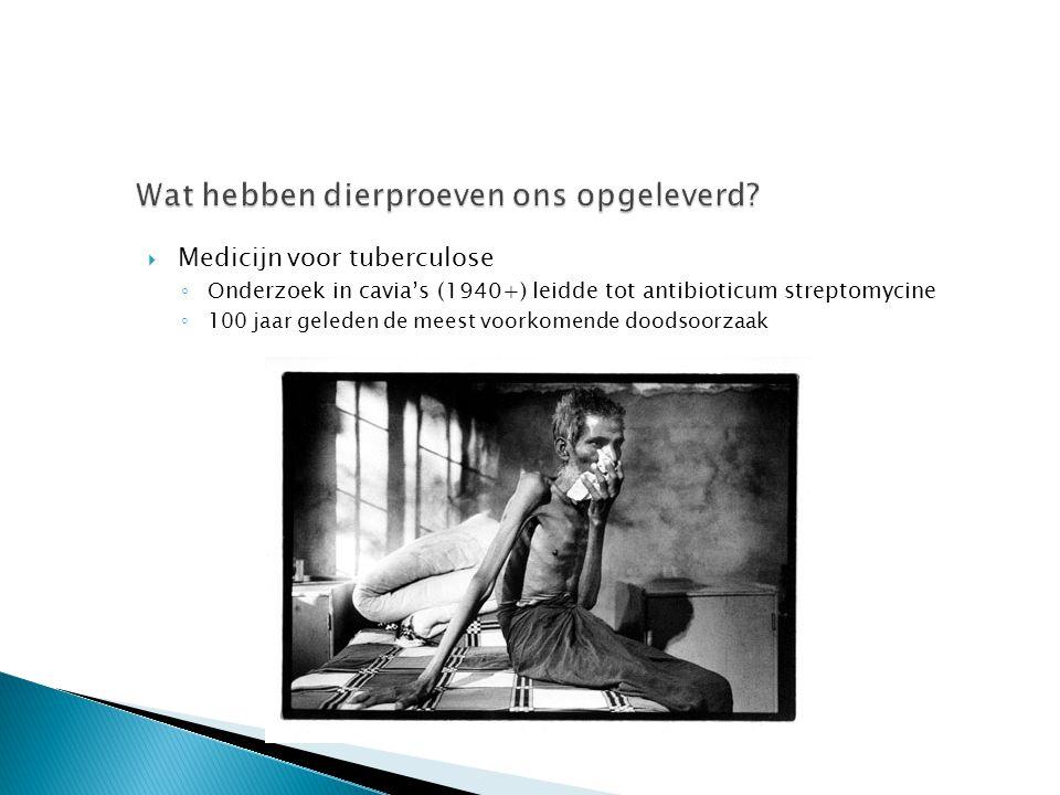  Medicijn voor tuberculose ◦ Onderzoek in cavia's (1940+) leidde tot antibioticum streptomycine ◦ 100 jaar geleden de meest voorkomende doodsoorzaak