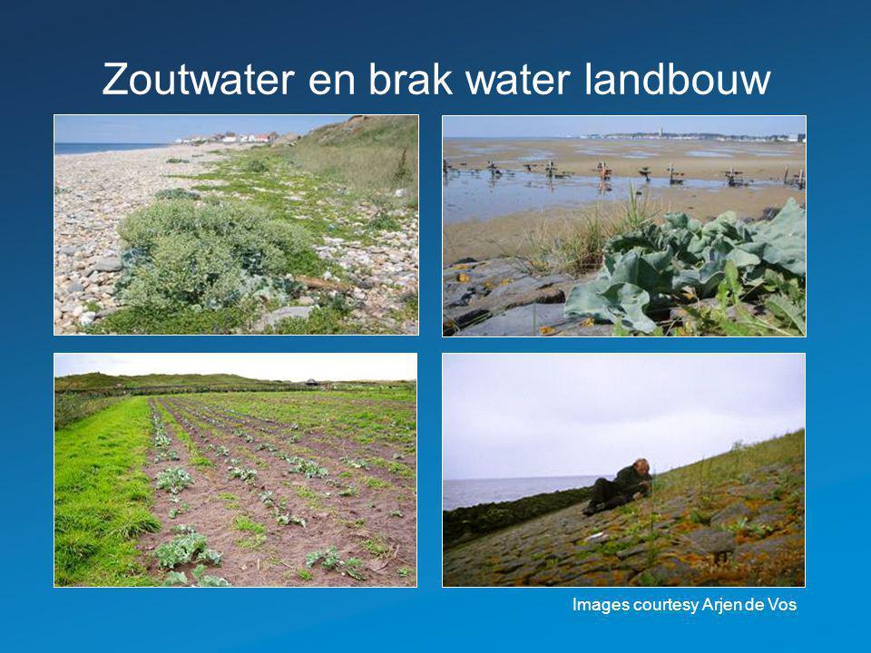 Zoutwater en brak water landbouw Images courtesy Arjen de Vos