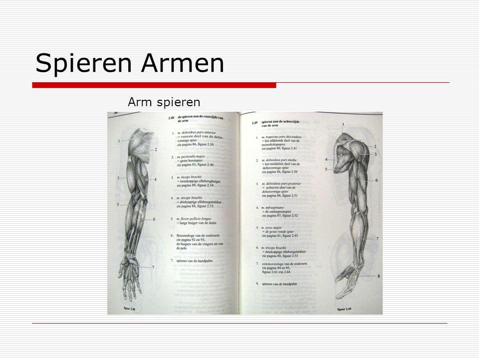 Spieren Armen Arm spieren