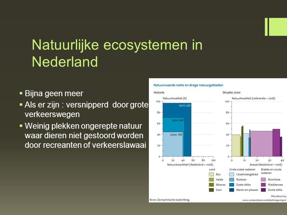 Natuurlijke ecosystemen in Nederland  Bijna geen meer  Als er zijn : versnipperd door grote verkeerswegen  Weinig plekken ongerepte natuur waar die