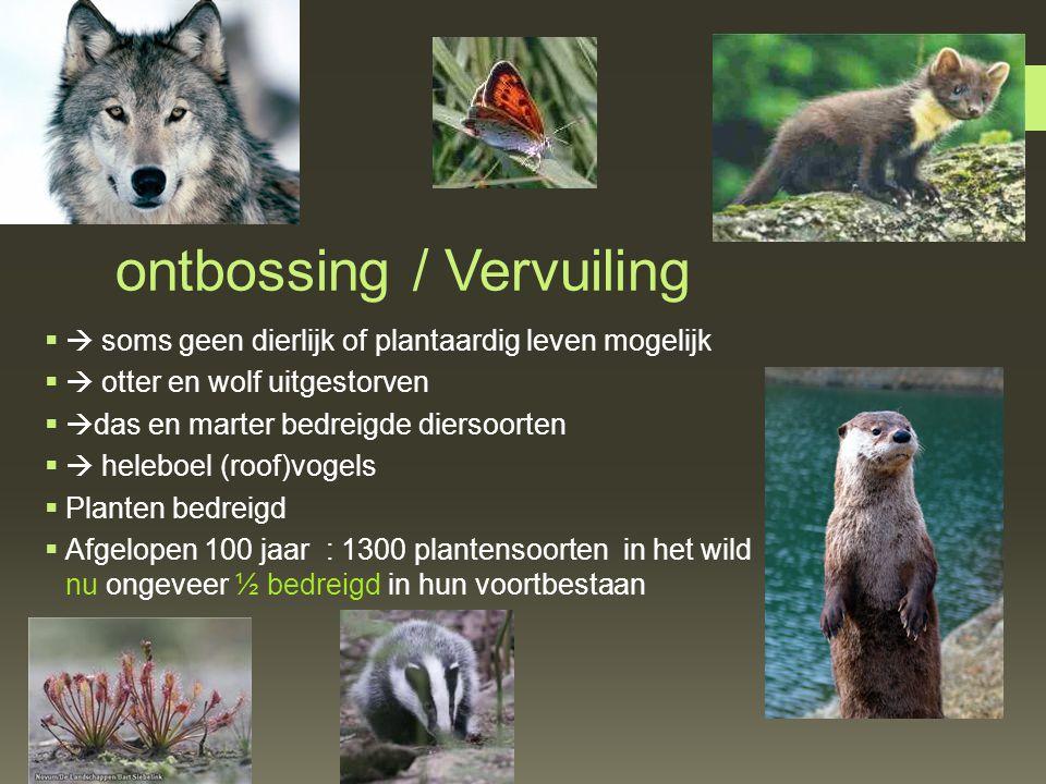 ontbossing / Vervuiling  soms geen dierlijk of plantaardig leven mogelijk  otter en wolf uitgestorven  das en marter bedreigde diersoorten  he