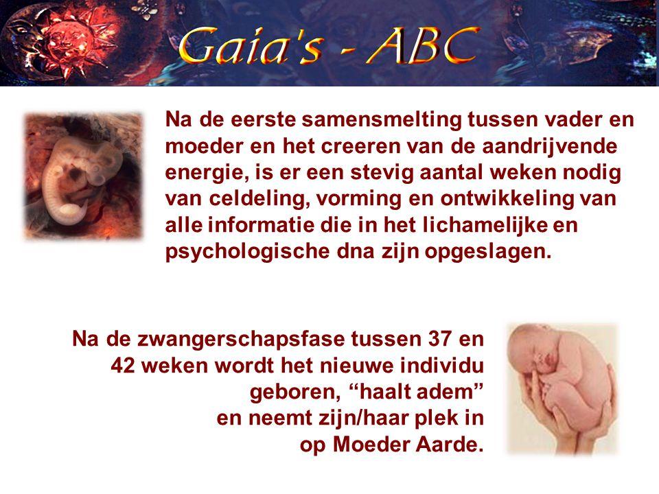 Na de zwangerschapsfase tussen 37 en 42 weken wordt het nieuwe individu geboren, haalt adem en neemt zijn/haar plek in op Moeder Aarde.