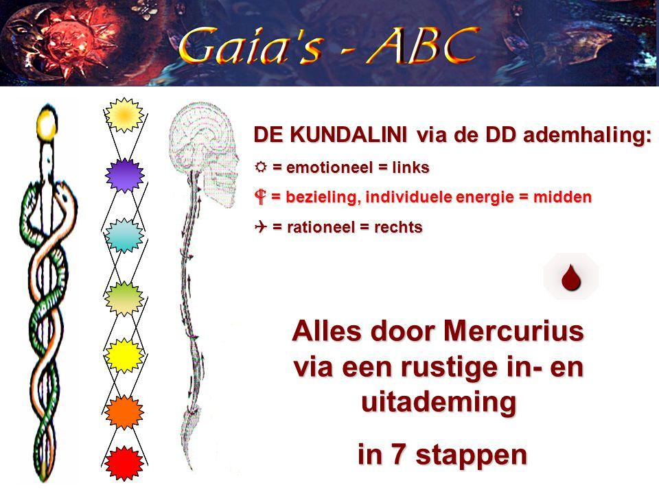 DE KUNDALINI via de DD ademhaling:  = emotioneel = links  = bezieling, individuele energie = midden  = rationeel = rechts Alles door Mercurius via een rustige in- en uitademing in 7 stappen in 7 stappen 