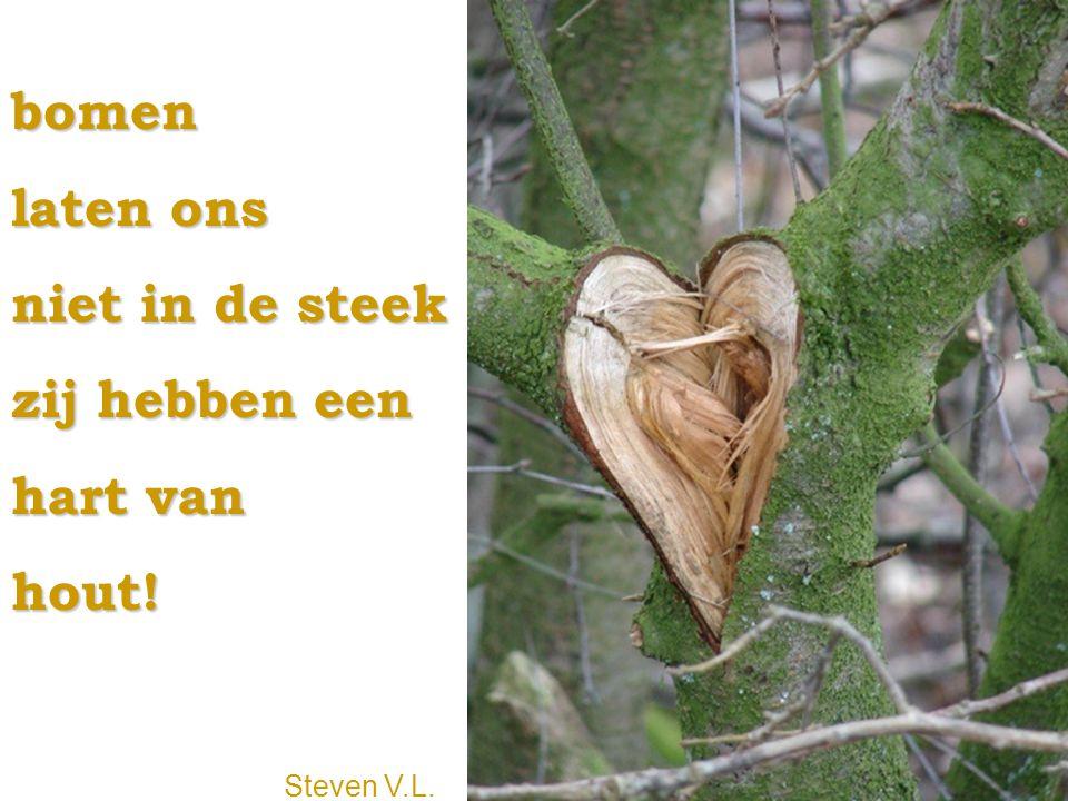 bomen laten ons niet in de steek zij hebben een hart van hout! Steven V.L.