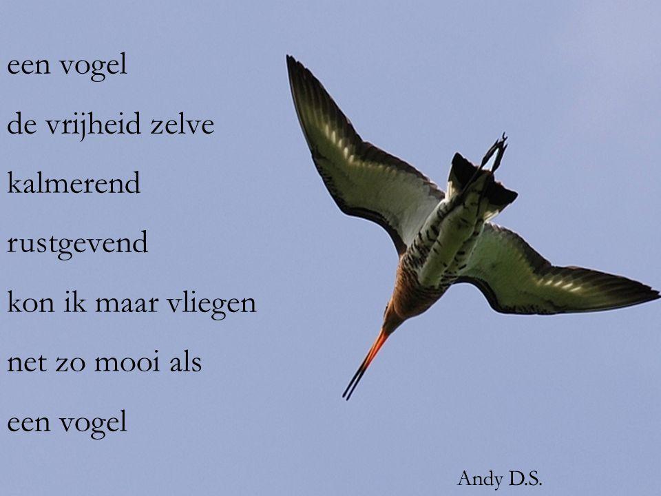 een vogel de vrijheid zelve kalmerend rustgevend kon ik maar vliegen net zo mooi als een vogel Andy D.S.