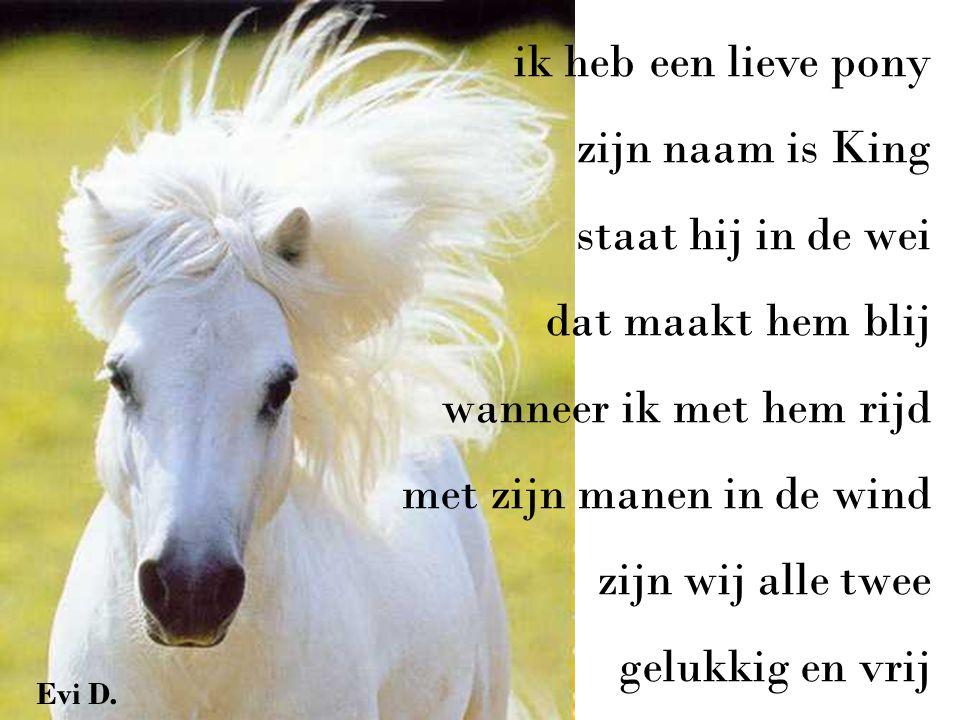 ik heb een lieve pony zijn naam is King staat hij in de wei dat maakt hem blij wanneer ik met hem rijd met zijn manen in de wind zijn wij alle twee gelukkig en vrij Evi D.
