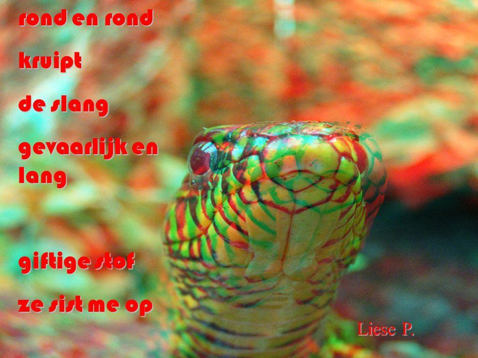 rond en rond kruipt de slang gevaarlijk en lang giftige stof ze sist me op Liese P.