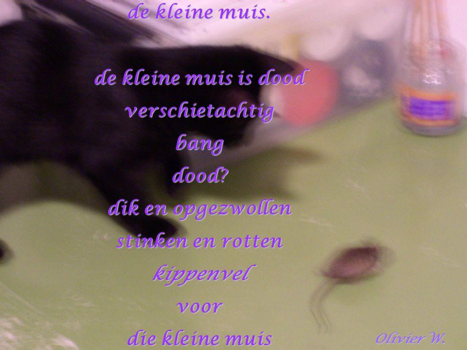 de kleine muis. de kleine muis is dood verschietachtigbangdood? dik en opgezwollen stinken en rotten kippenvelvoor die kleine muis Olivier W. Olivier