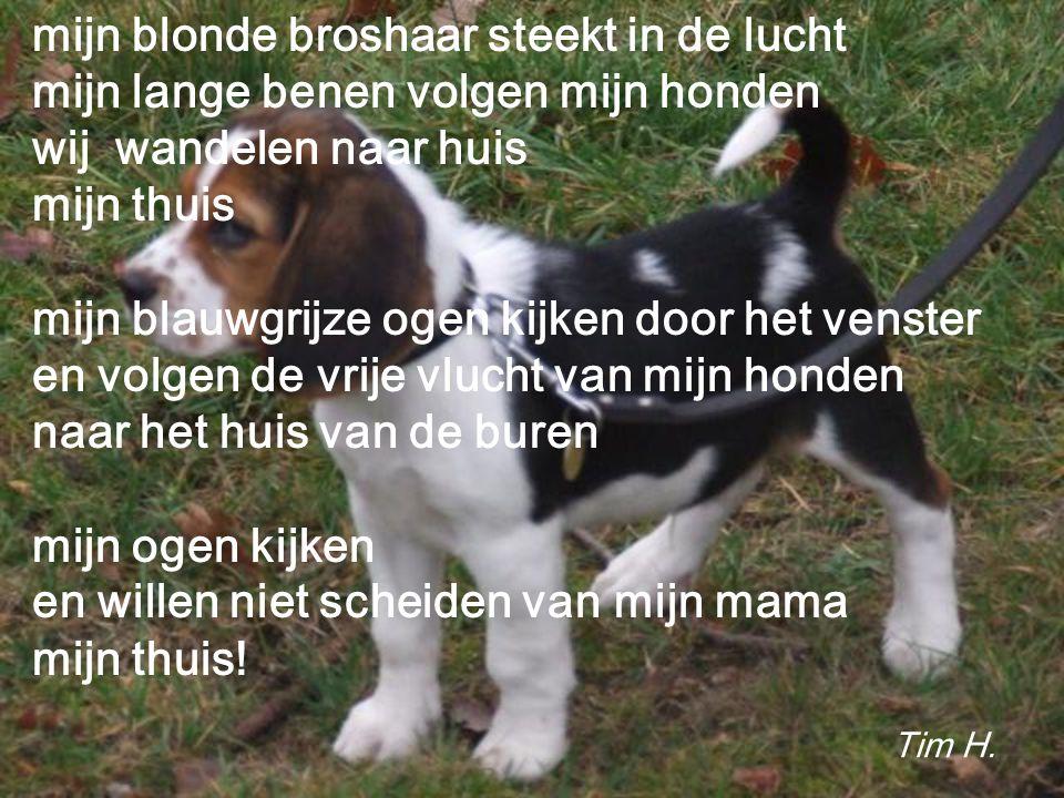 mijn blonde broshaar steekt in de lucht mijn lange benen volgen mijn honden wij wandelen naar huis mijn thuis mijn blauwgrijze ogen kijken door het venster en volgen de vrije vlucht van mijn honden naar het huis van de buren mijn ogen kijken en willen niet scheiden van mijn mama mijn thuis.