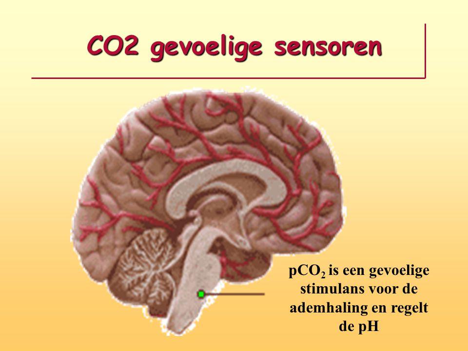 CO2 gevoelige sensoren pCO 2 is een gevoelige stimulans voor de ademhaling en regelt de pH