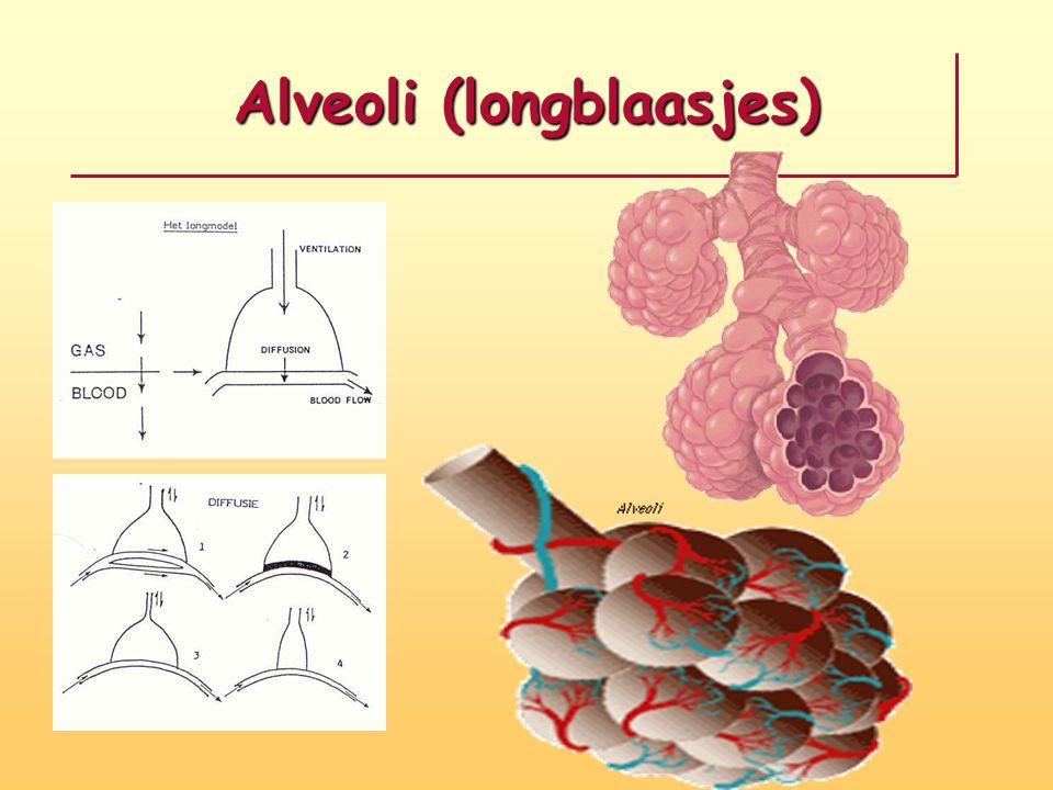Alveoli (longblaasjes)