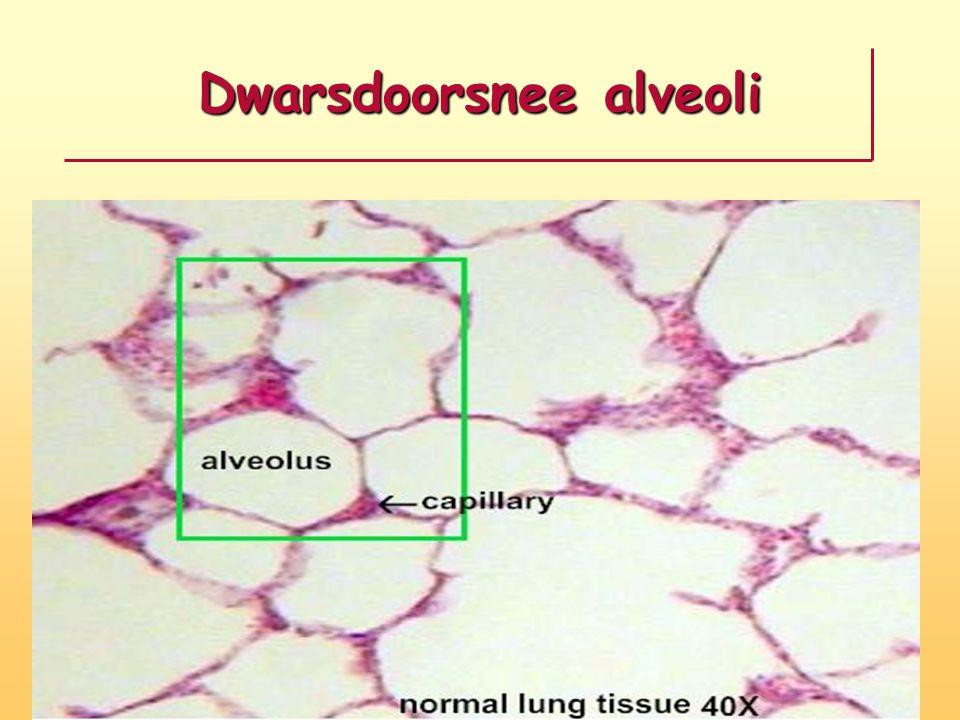 Kruispunt van drie alveoli