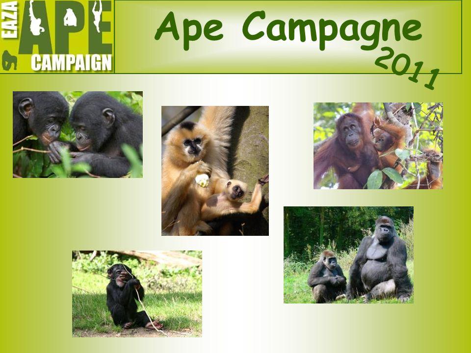 Ape Campagne 2011