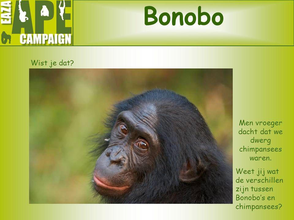 Bonobo Wist je dat? Men vroeger dacht dat we dwerg chimpansees waren. Weet jij wat de verschillen zijn tussen Bonobo's en chimpansees?