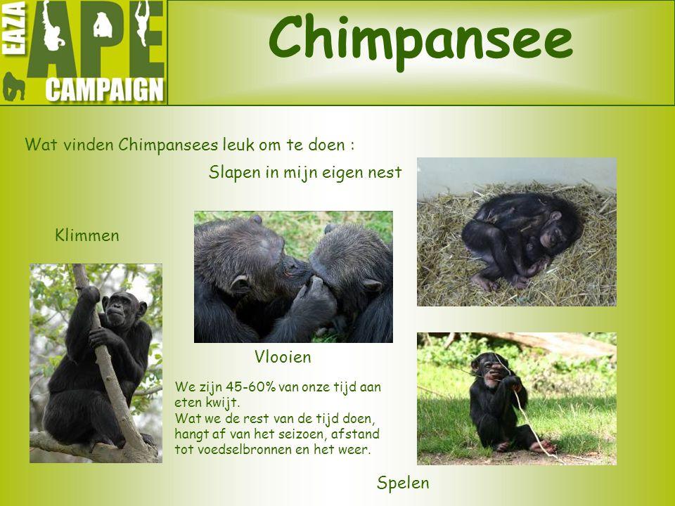 Chimpansee Wat vinden Chimpansees leuk om te doen : Vlooien Spelen Slapen in mijn eigen nest Klimmen We zijn 45-60% van onze tijd aan eten kwijt. Wat