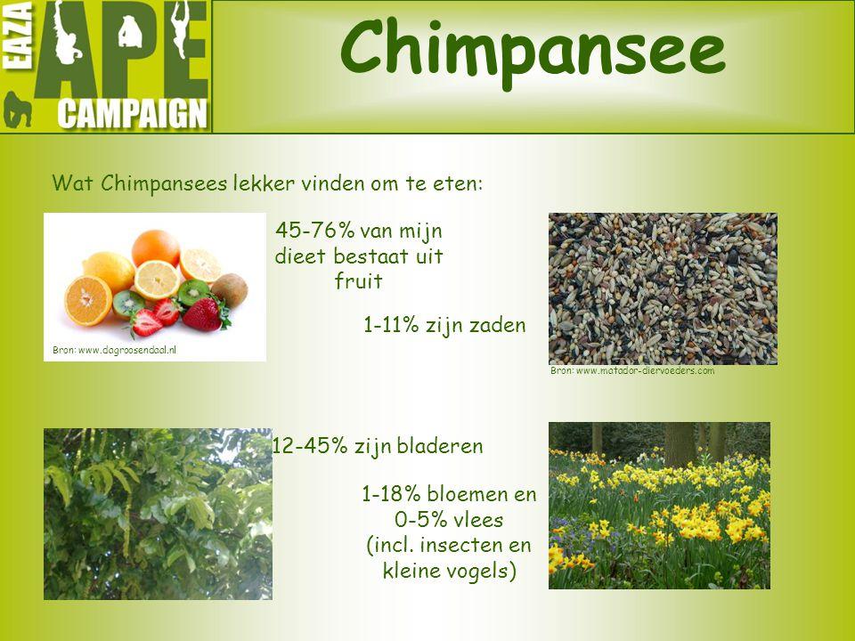 Chimpansee Wat Chimpansees lekker vinden om te eten: 45-76% van mijn dieet bestaat uit fruit 12-45% zijn bladeren 1-18% bloemen en 0-5% vlees (incl. i