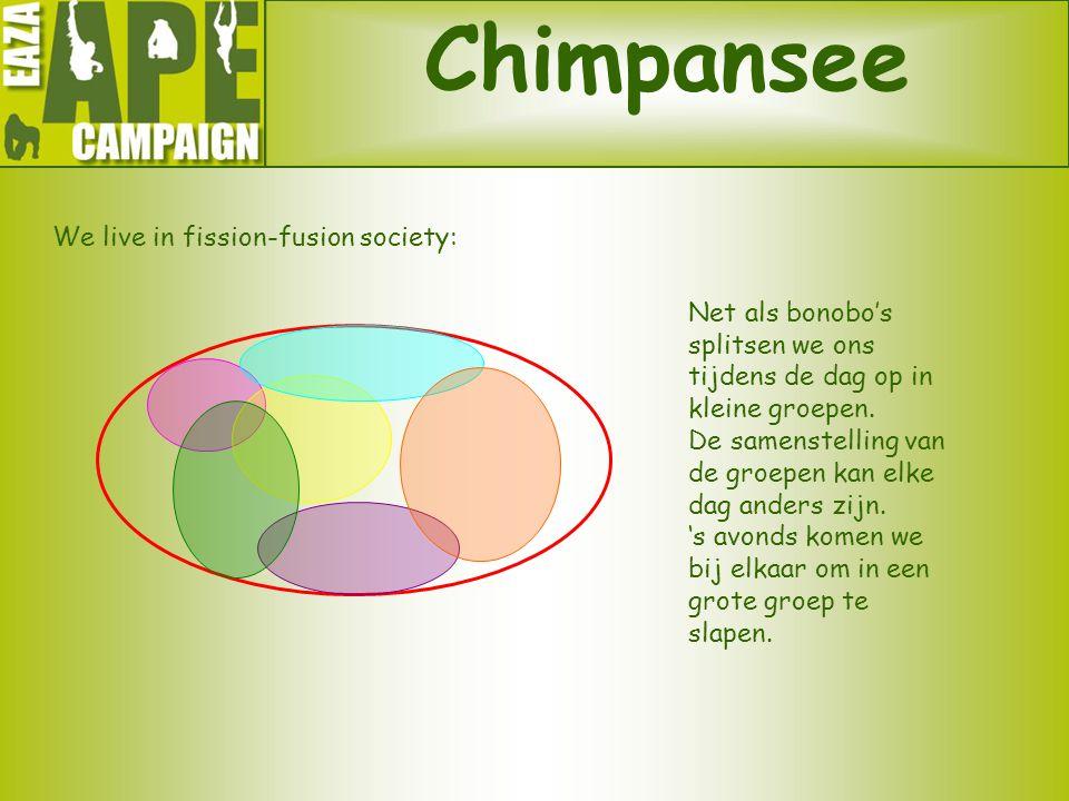 Chimpansee We live in fission-fusion society: Net als bonobo's splitsen we ons tijdens de dag op in kleine groepen. De samenstelling van de groepen ka
