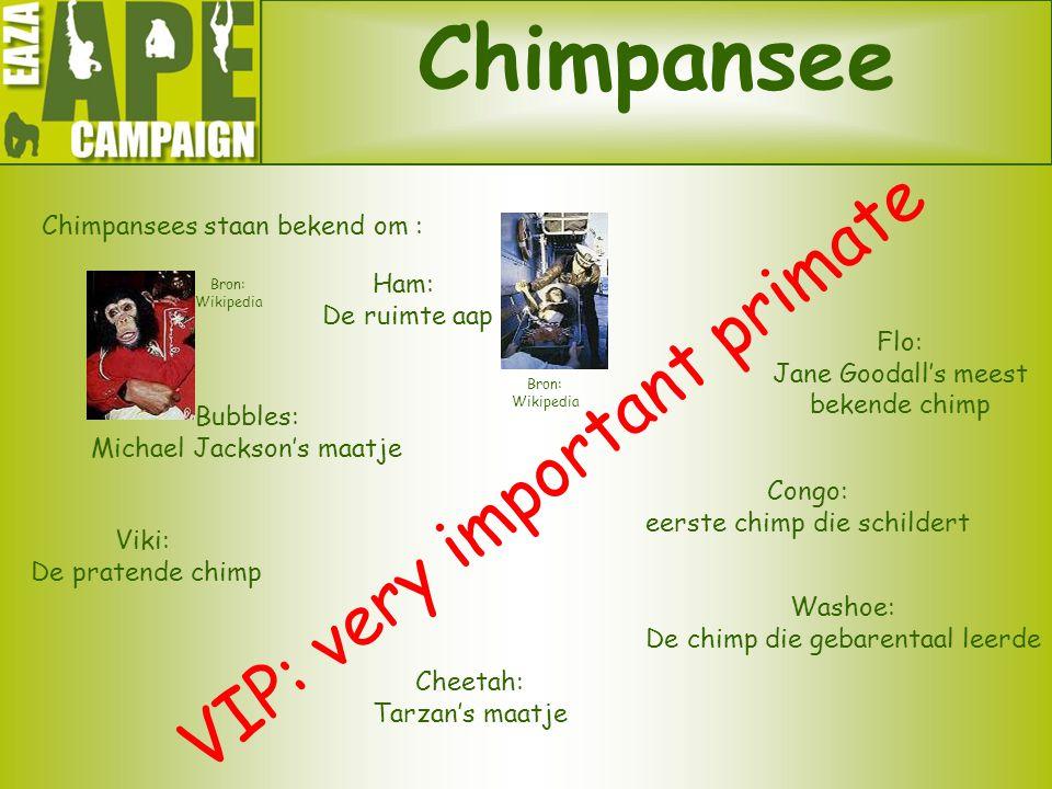 Chimpansee Chimpansees staan bekend om : VIP: very important primate Cheetah: Tarzan's maatje Flo: Jane Goodall's meest bekende chimp Congo: eerste ch