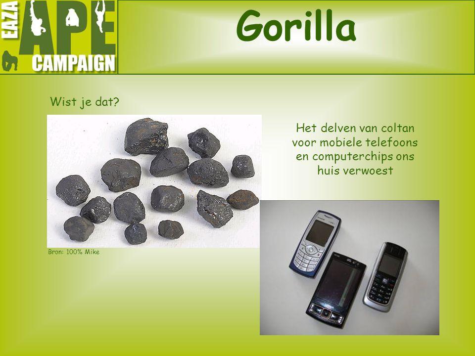 Gorilla Wist je dat? Het delven van coltan voor mobiele telefoons en computerchips ons huis verwoest Bron: 100% Mike