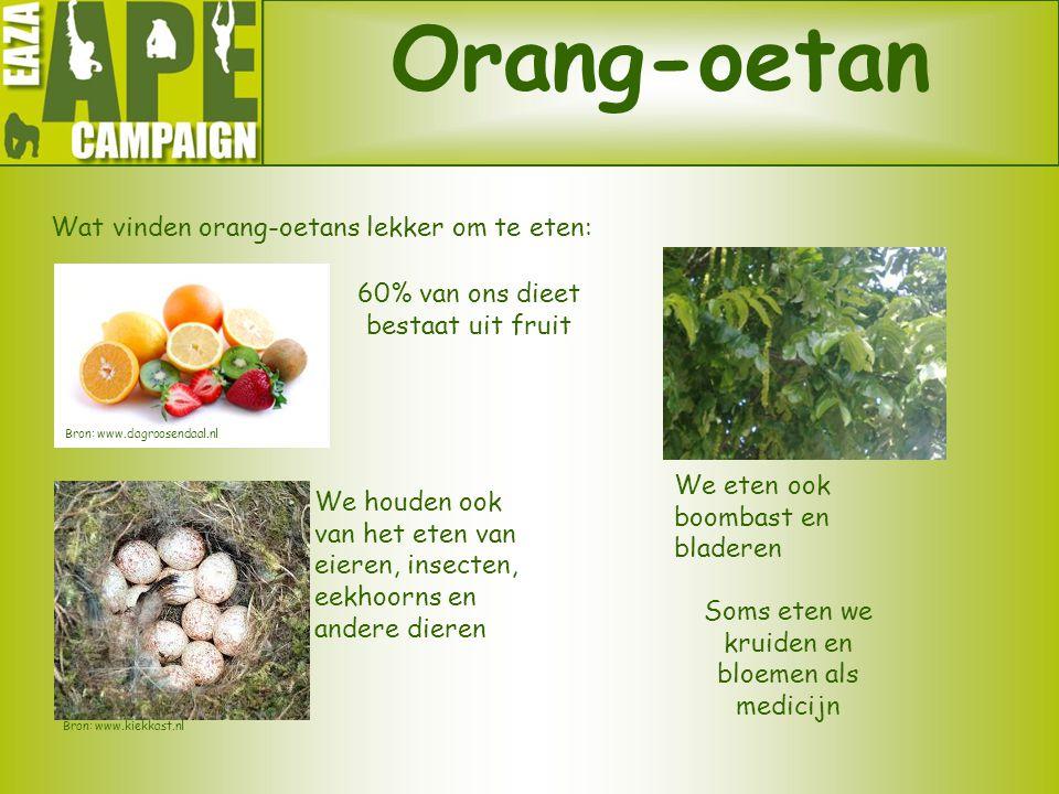 Orang-oetan Wat vinden orang-oetans lekker om te eten: 60% van ons dieet bestaat uit fruit Soms eten we kruiden en bloemen als medicijn Bron: www.dagr