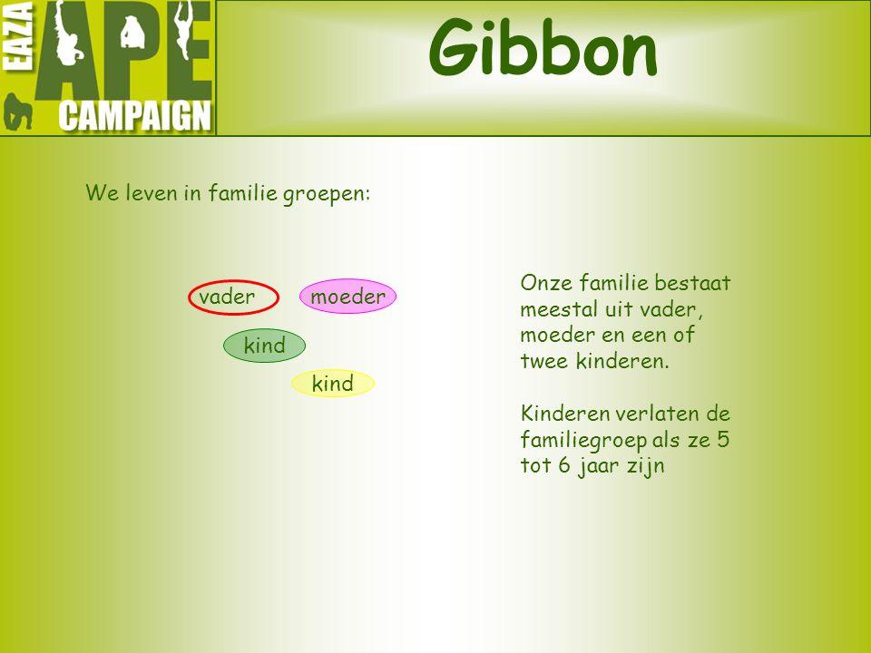 Gibbon We leven in familie groepen: Onze familie bestaat meestal uit vader, moeder en een of twee kinderen. Kinderen verlaten de familiegroep als ze 5