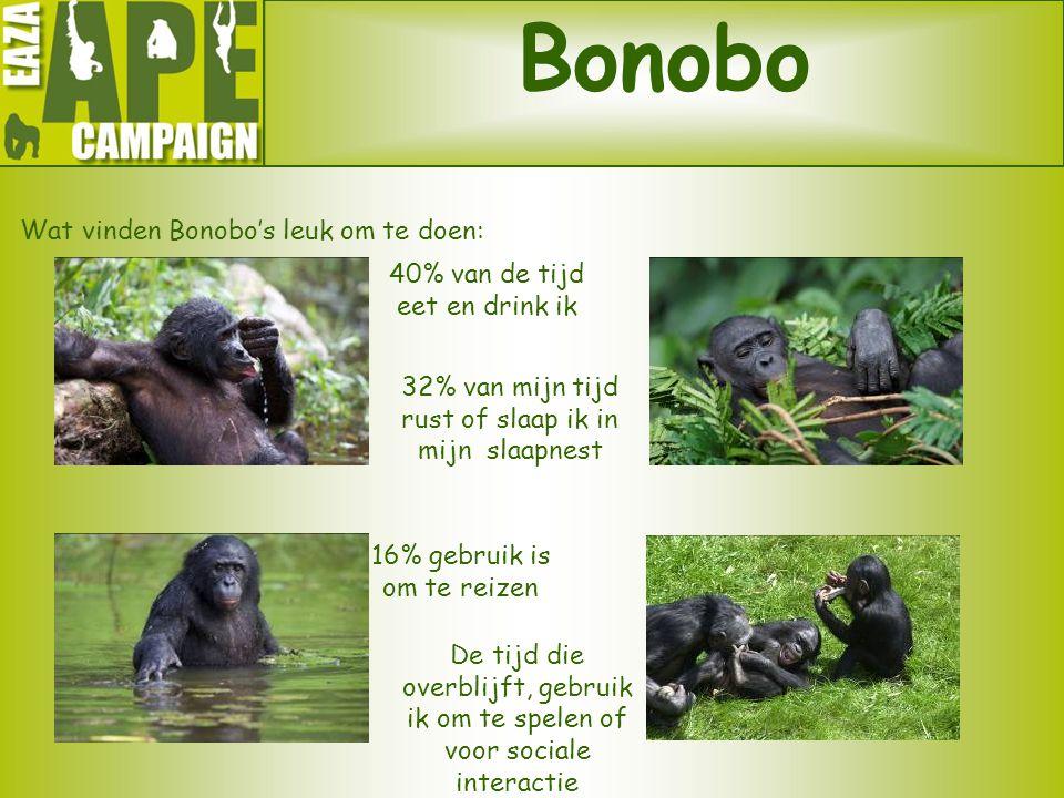 Bonobo Wat vinden Bonobo's leuk om te doen: 40% van de tijd eet en drink ik 16% gebruik is om te reizen De tijd die overblijft, gebruik ik om te spele
