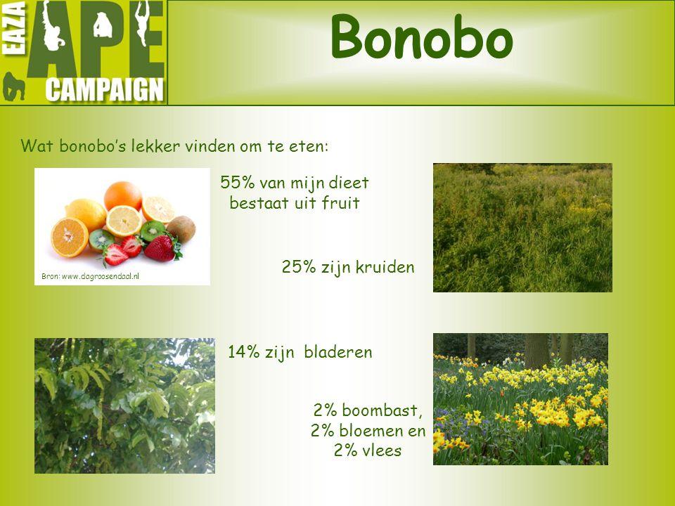 Bonobo Wat bonobo's lekker vinden om te eten: 55% van mijn dieet bestaat uit fruit 14% zijn bladeren 2% boombast, 2% bloemen en 2% vlees 25% zijn krui
