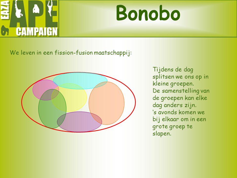 Bonobo We leven in een fission-fusion maatschappij: Tijdens de dag splitsen we ons op in kleine groepen. De samenstelling van de groepen kan elke dag