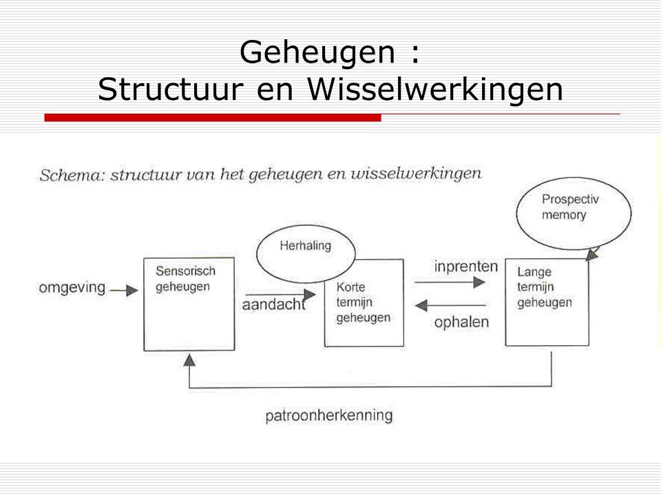 Geheugen : Structuur en Wisselwerkingen