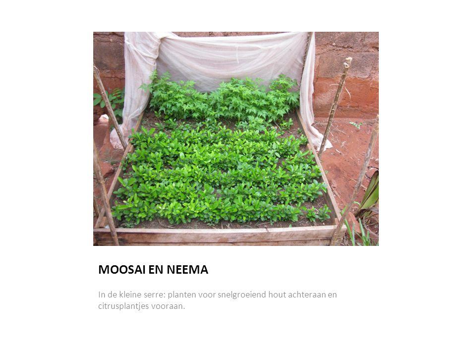 MOOSAI EN NEEMA In de kleine serre: planten voor snelgroeiend hout achteraan en citrusplantjes vooraan.