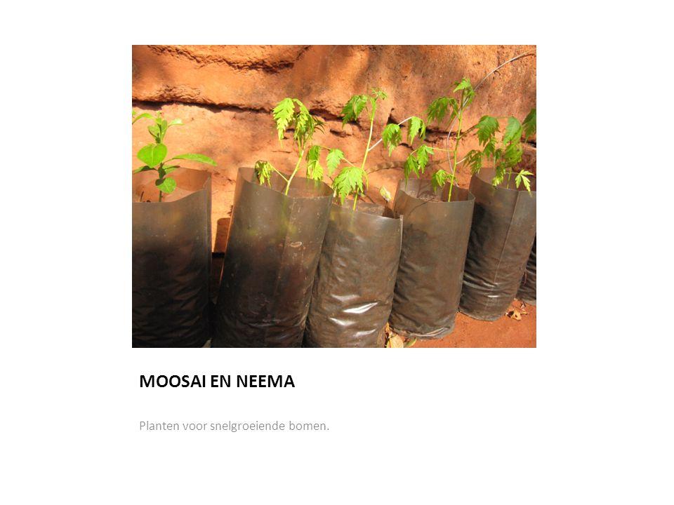 MOOSAI EN NEEMA Planten voor snelgroeiende bomen.