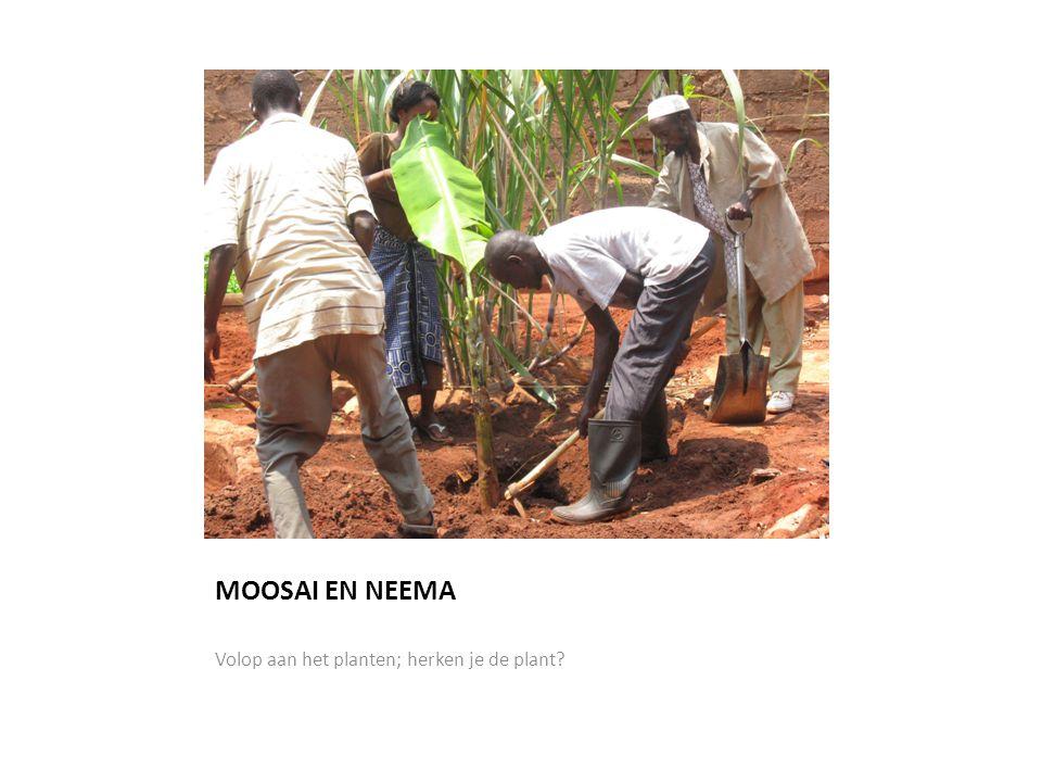 MOOSAI EN NEEMA Volop aan het planten; herken je de plant