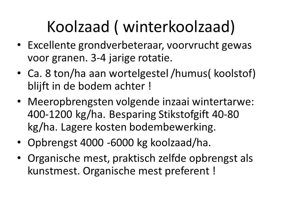 Koolzaad ( winterkoolzaad) Excellente grondverbeteraar, voorvrucht gewas voor granen.