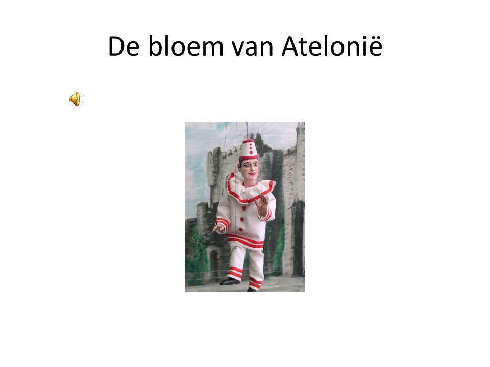 De bloem van Atelonië