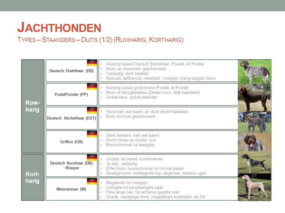 J ACHTHONDEN T YPES – S TAANDERS – D UITS (1/2) (R UWHARIG, K ORTHARIG ) Deutsch Drahthaar (DD) Deutsch Stichelhaar (DST) Deutsch Kurzhaar (DK) ~Braqu