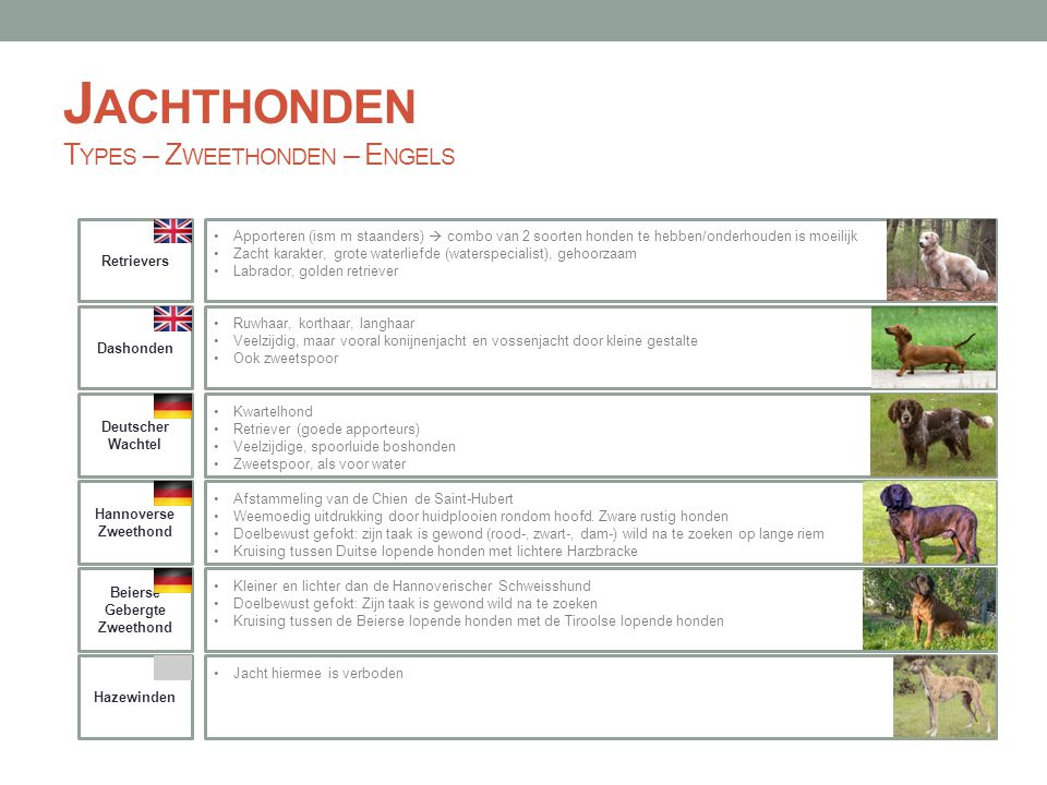J ACHTHONDEN T YPES – Z WEETHONDEN – E NGELS Hannoverse Zweethond Dashonden Beierse Gebergte Zweethond Retrievers Apporteren (ism m staanders)  combo