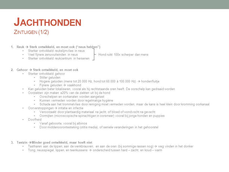 """J ACHTHONDEN Z INTUIGEN (1/2) 1.Reuk  Sterk ontwikkeld, en moet ook (""""neus hebben"""") Sterker ontwikkeld reukslijmvlies in neus Veel fijnere zenuwuitei"""