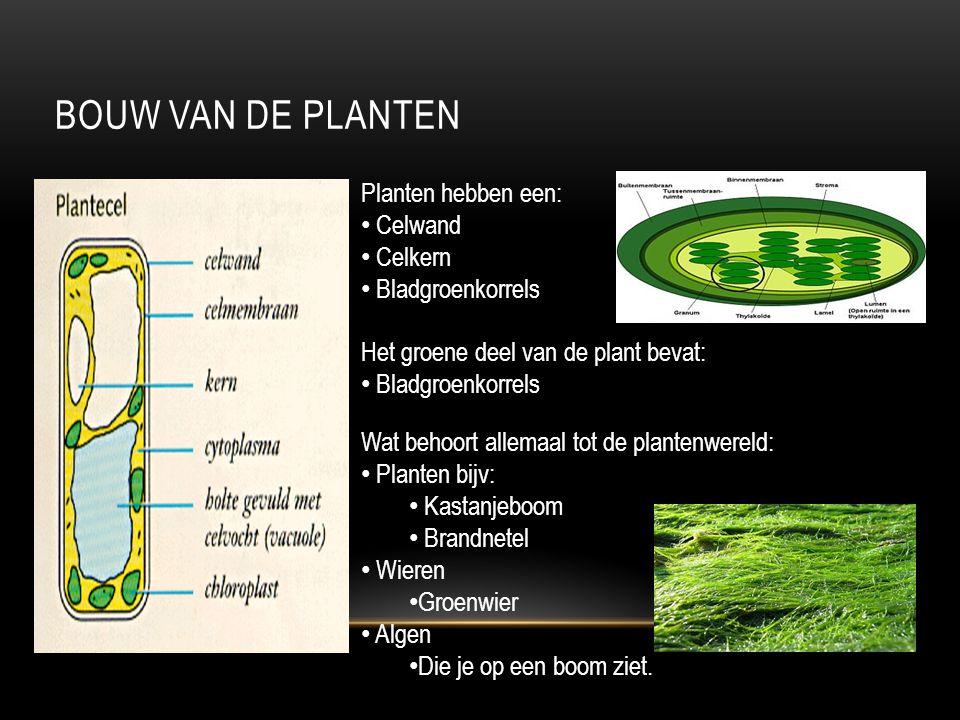 BOUW VAN DE PLANTEN Planten hebben een: Celwand Celkern Bladgroenkorrels Het groene deel van de plant bevat: Bladgroenkorrels Wat behoort allemaal tot