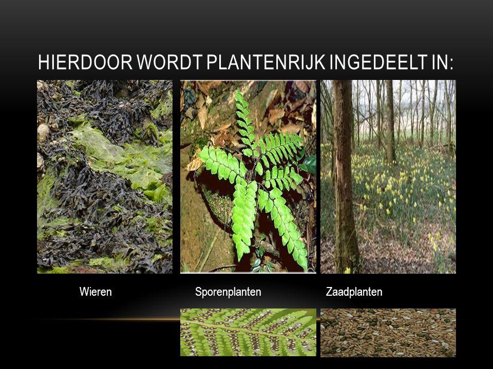 HIERDOOR WORDT PLANTENRIJK INGEDEELT IN: Wieren SporenplantenZaadplanten