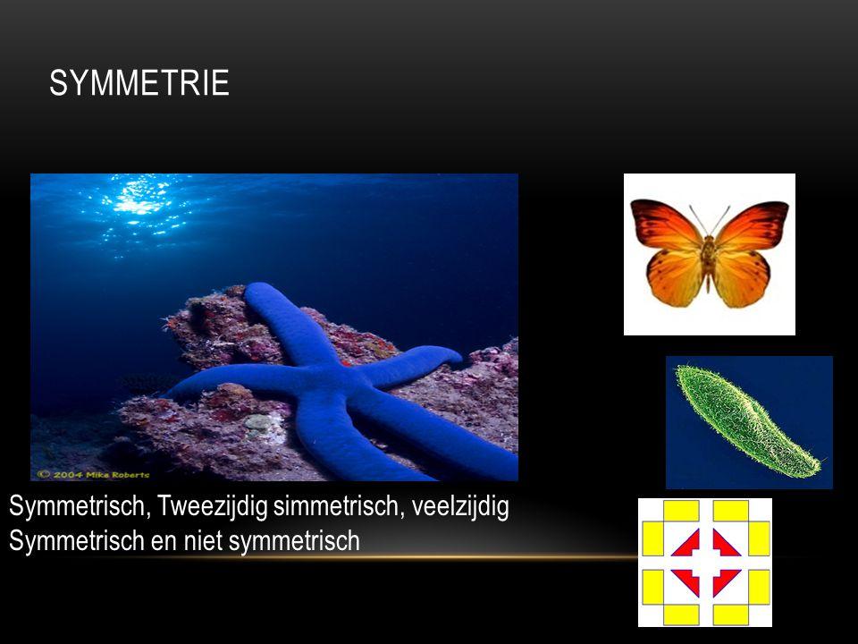SYMMETRIE Symmetrisch, Tweezijdig simmetrisch, veelzijdig Symmetrisch en niet symmetrisch