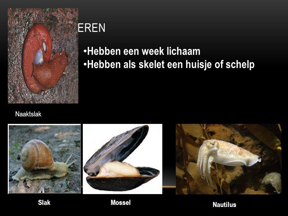 WEEKDIEREN Mossel Nautilus Slak Hebben een week lichaam Hebben als skelet een huisje of schelp Naaktslak